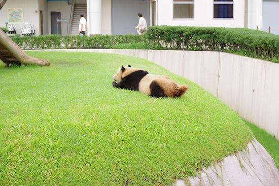 これお気に入りの写真。パンダがぐたーんってしててきゃわゆい!!!!