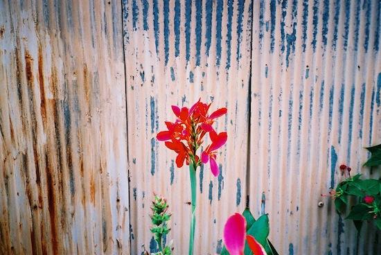 近所に咲いてた花を撮ったらなんとも言えない雰囲気!いい!