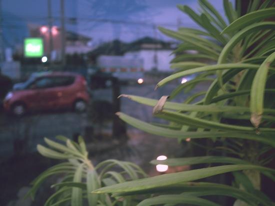 観葉植物:Kenko DSC517