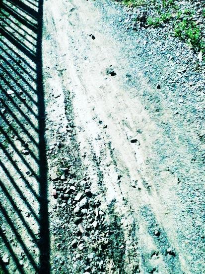 なんか地面を撮ると面白い感じになって何枚も地面写真を撮ってしまった。