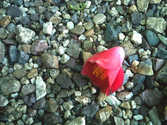 赤い花:Kenko DSC517