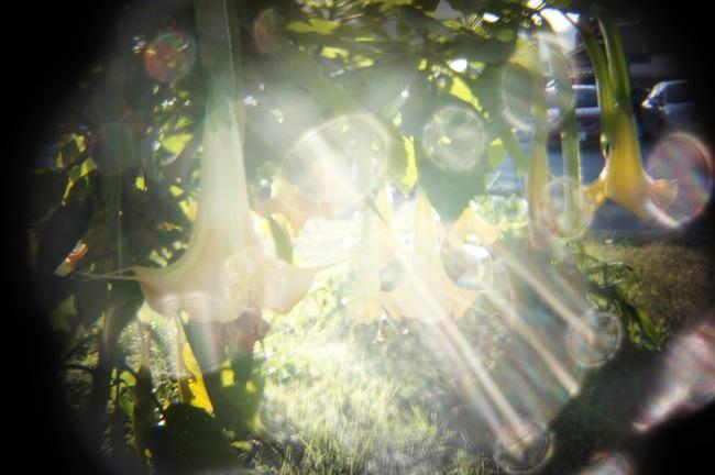 これも逆光で撮りました。