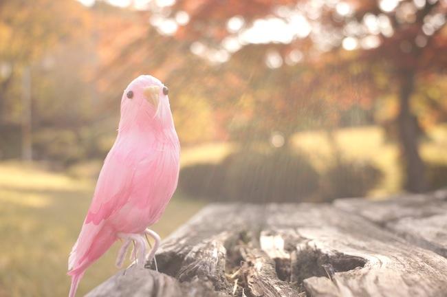 ピンクの鳥