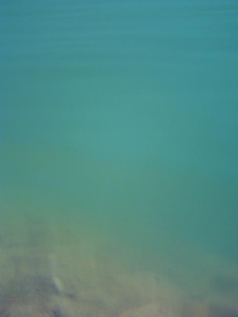 水中で撮るとこんなに素敵な水色!まさに水色です!