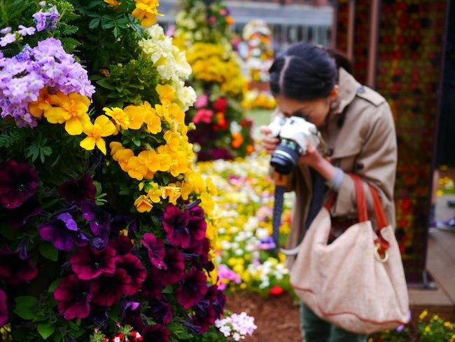 花を撮るツマー