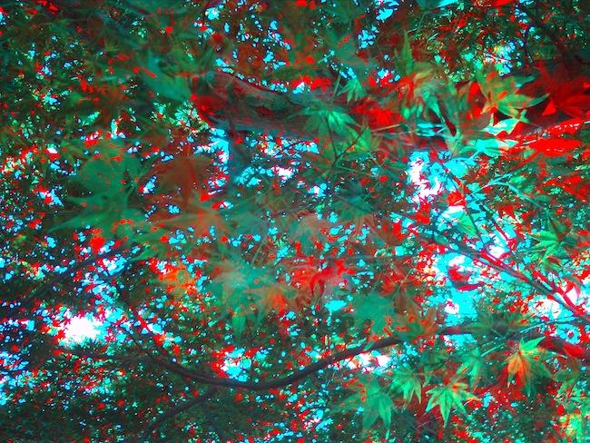 季節外れの紅葉:Vivitar ViviCam T135 3D Digital Camera