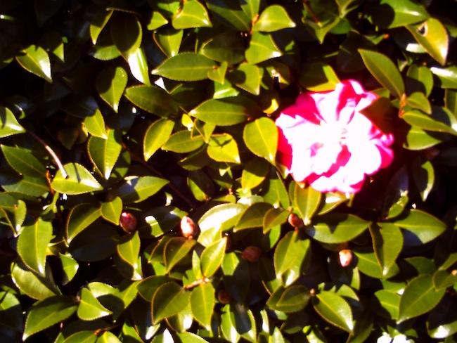 真っ赤な花が白くなってしまいました。こういうのが変デジっぽくて好き。