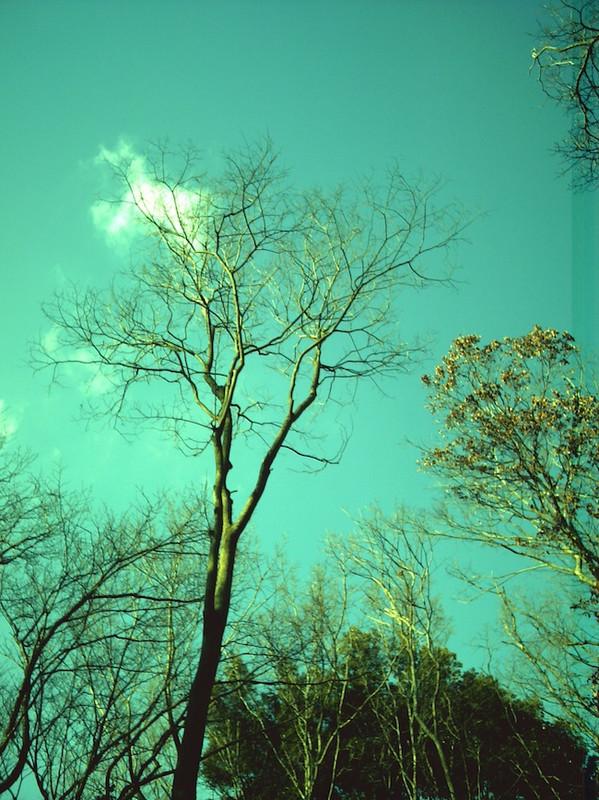 緑かぶりな木々と空
