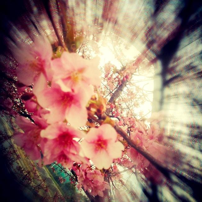 iPhone桜撮影:CENTER FOCUS FILTER使用