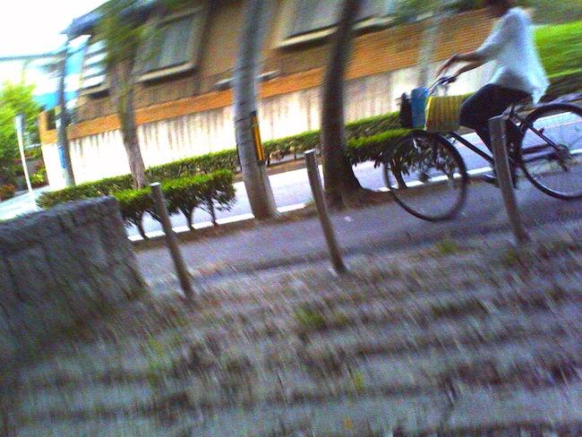 デジタルハリネズミお散歩写真